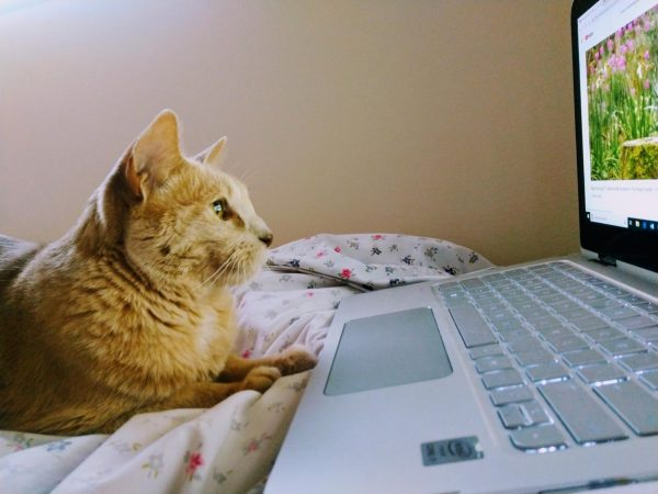 Runner-up - Work from Home Pet   Cooper, submitted by Kathy Marlock.