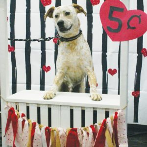 Fenton resident Spuds the Australian Cattle Dog, smiles for the camera while posing at the kissing booth erected Feb. 9 at Pet Supplies Plus in Oakville. The kissing booth was erected in the store by members of the Oakville High School FCCLA (Family, Career and Community Leaders of America) club as a fundraiser for Stray Rescue. Photo by Bill Milligan.