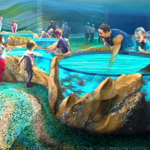The second floor of the aquarium gives visitors the opportunity to get their hands wet with touch tanks and interactive exhibits. That experience will be temporarily closed due to COVID-19.