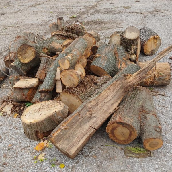 Examples of the free firewood available for city of St. Louis residents at Carondelet, Forest Park and O